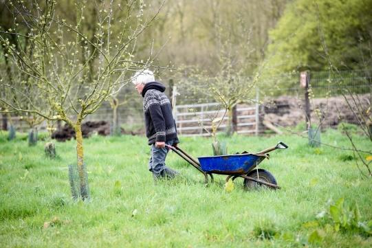 orchard-roger-wheelbarrow